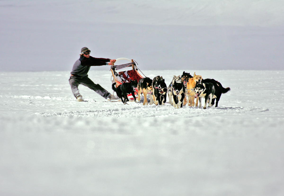 Action und Adventure Dog Sledding